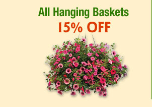 ALL Hanging Baskets 15% OFF